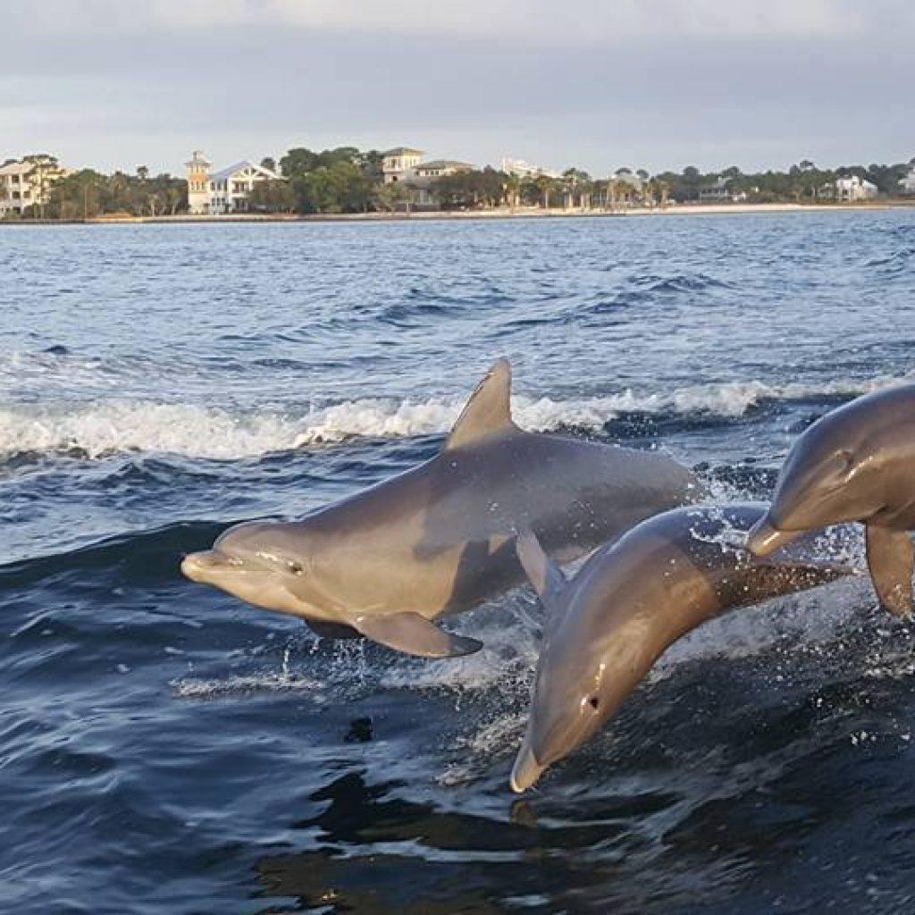 Dolphin Cruises Orange Beach Alabama