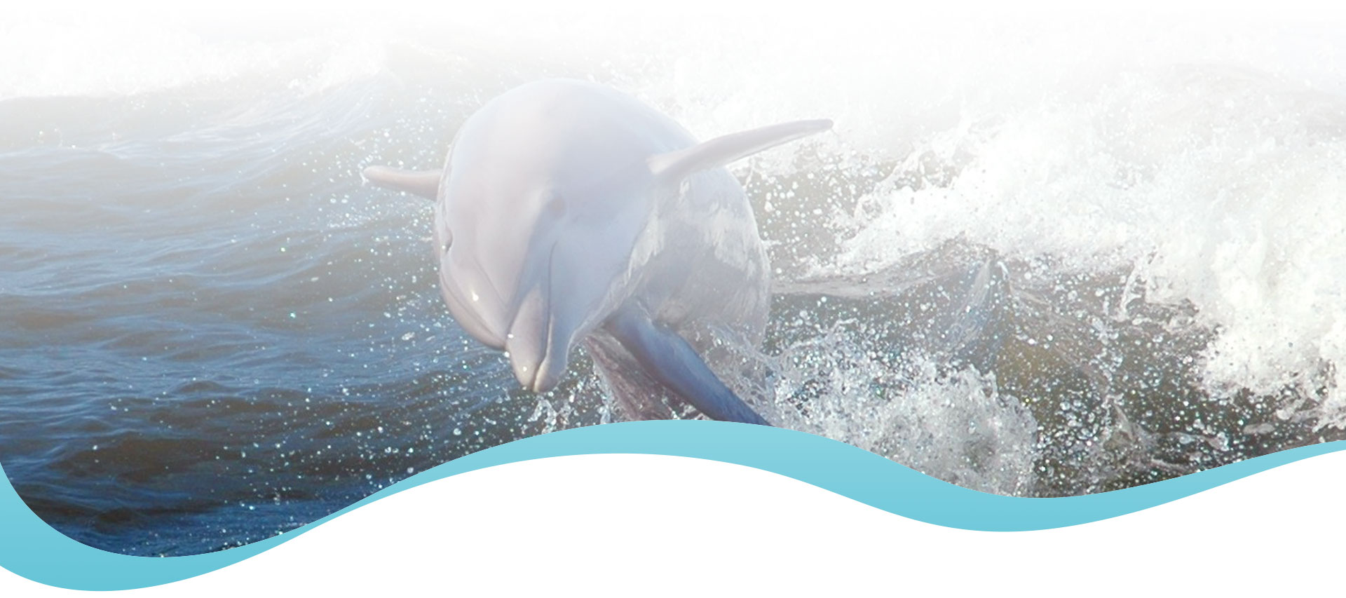 Dolphins Orange Beach Alabama