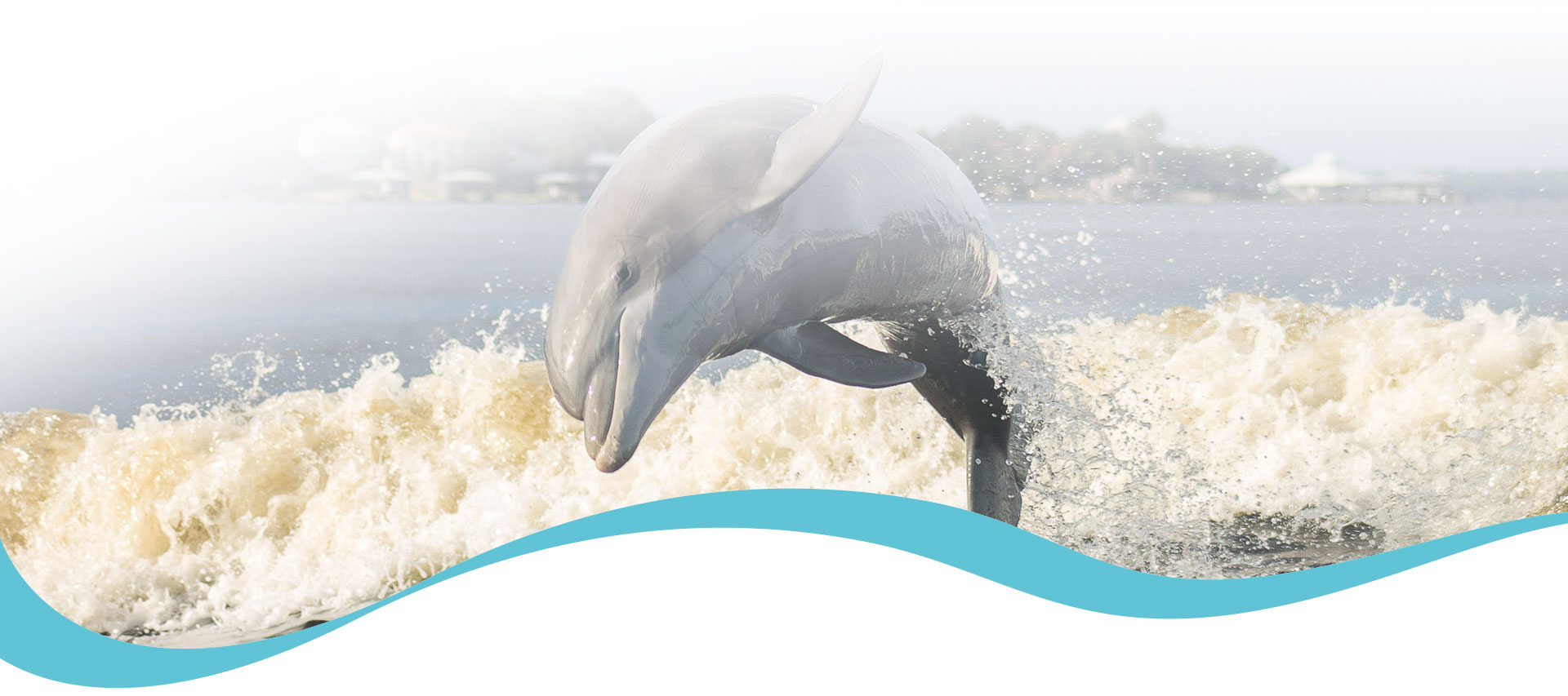 $12 Dolphin Cruise - Gulf Shores, Orange Beach, Alabama
